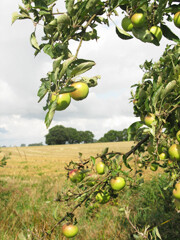 Rezept von Michel Roux: Apfelstrudel