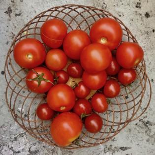 rezepte-tomaten-valentinas-2