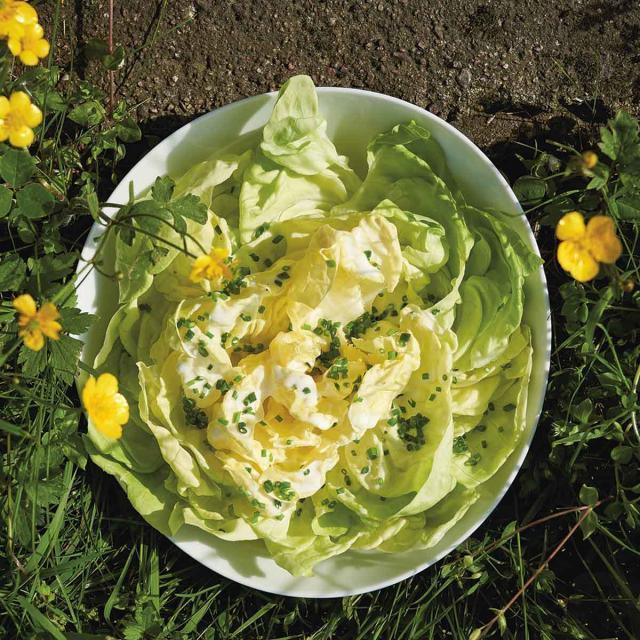 Rezept von Ben Perry: Kopfsalat mit friesischem Sahnedressing